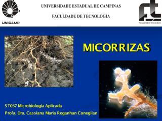 Aula6_Micorrizas.pdf